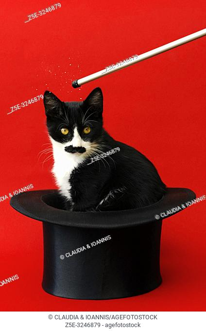 Black and white kitten sitting in a tophat and looking at camera