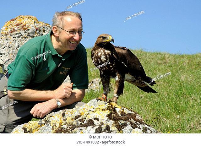 Germany / GERMANY, OSTALBKREIS, 09.05.2008, Falkner mit jungem Steinadler (Aquila chrysaetos) Falconer with young Golden Eagle