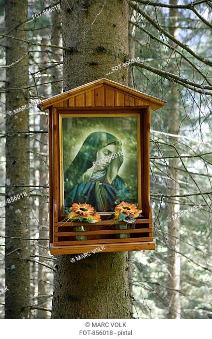 Shrine to the Virgin Mary hanging on a tree in the woods