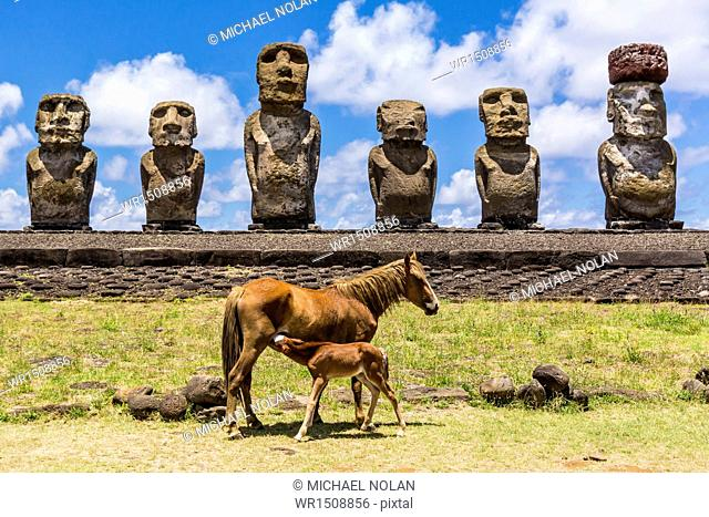 Mare nursing foal at the 15 moai restored ceremonial site of Ahu Tongariki on Easter Island (Isla de Pascua) (Rapa Nui), UNESCO World Heritage Site, Chile