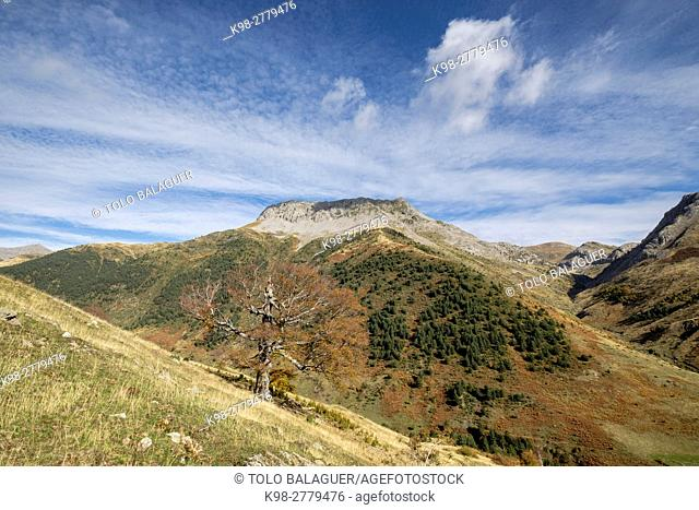Pico de la Ralla, 2146 mts, Mallo de las Foyas, Valley of Hecho, western valleys, Pyrenean mountain range, province of Huesca, Aragon, Spain