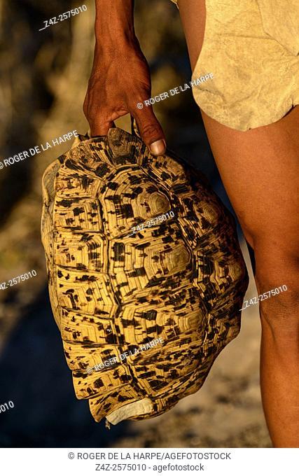 San or Bushman man holding a Leopard tortoise (Stigmochelys pardalis) shell. Haina Kalahari Lodge. Botswana