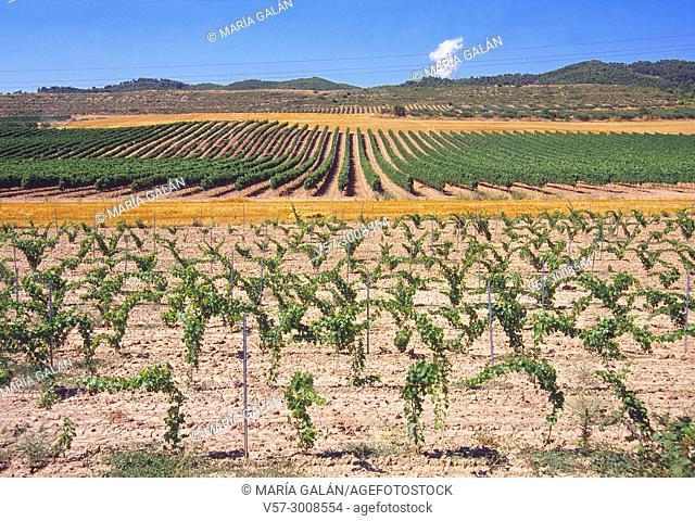 Vineyards. Irache, Navarra, Spain