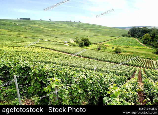 Coteaux de Champagne, Marne Champagne-Ardenne