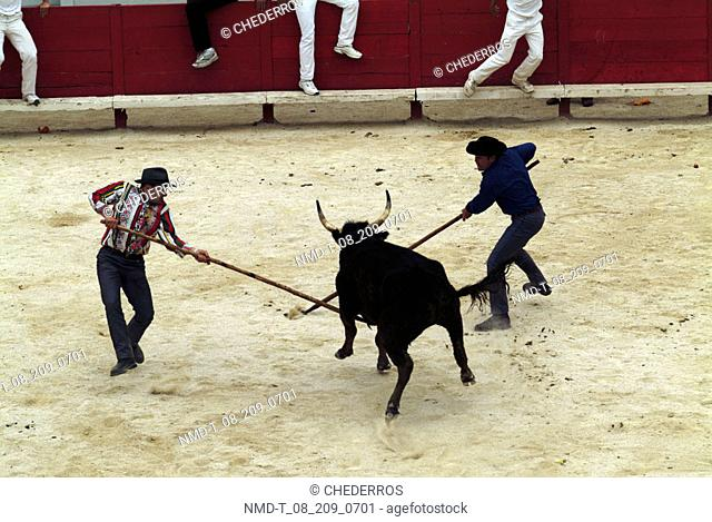 High angle view of two bullfighters fighting with a bull, Provence, France