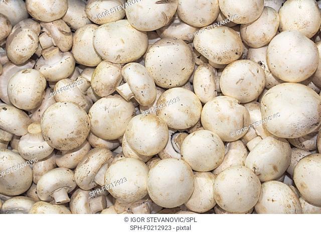 Organic mushroom at farmers market