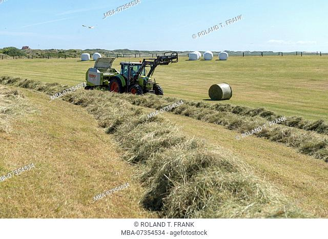 Germany, Lower Saxony, East Frisia, Juist, care of the protective dike, hay production