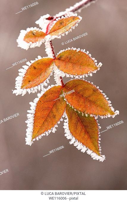 A frosty winter