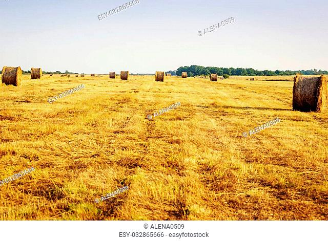 Beautiful landscape with straw bales in end of summer