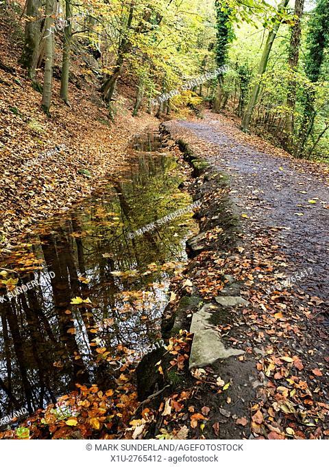 Footpath through Skipton Castle Woods in Autumn Skipton North Yorkshire England