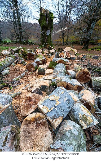Beech forest, Urbasa Natural Park, Navarra, Spain, Europe