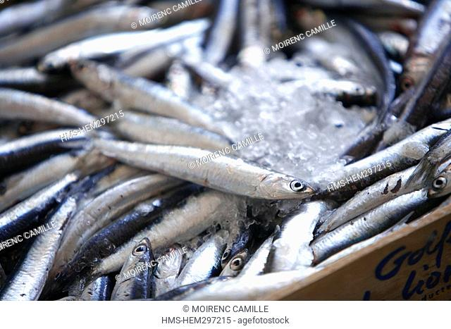 France, Pyrennees Orientales, Port Vendres, return from fishing, anchovies