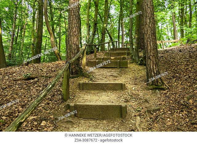 Berg en Dal, Netherlands. Wooden stairs inside a forest during summer season with backlight