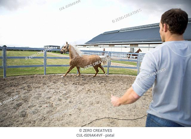 Male stablehand and palomino horse in paddock ring