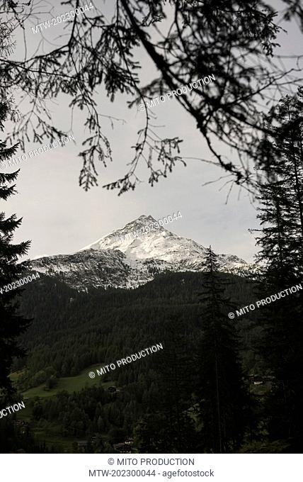 Grossglockner peak seen through tree branches, Austria Alps, Carinthia, Austria