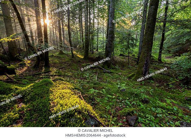 France, Puy de Dome, Parc Naturel Regional des Volcans d'Auvergne (Regional Natural reserve of the Volcanoes of Auvergne), Chain of Volcanic hills, Saint Ours