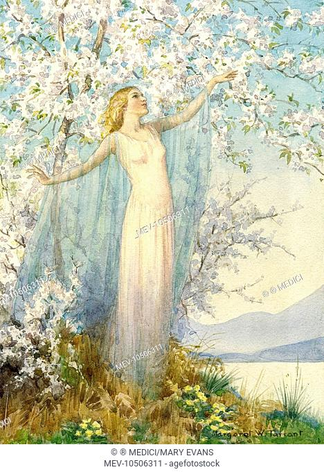 'Spring Hangs her Infant Blossoms' - tree in blossom with spring spirit