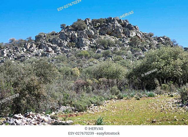 Mediterranean forest over quartzite mountains. Photo taken in Montes de Toledo, Ciudad Real Province, Spain