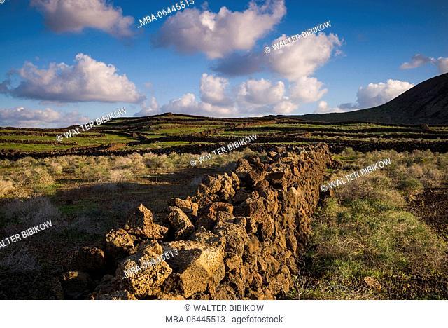 Spain, Canary Islands, Lanzarote, Guatiza, northern landscape