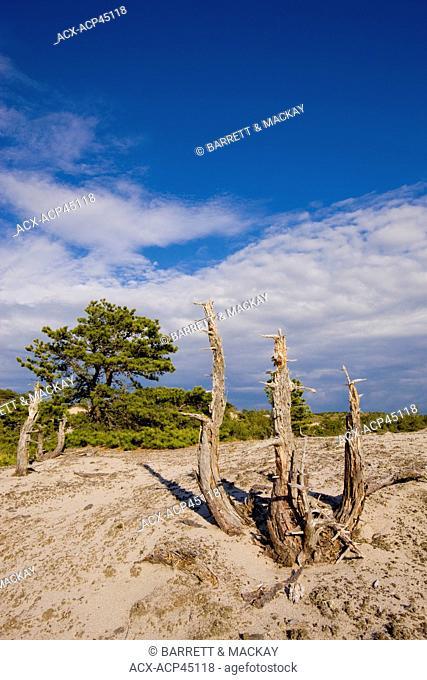 Cape Cod National Seashore, Massachusetts, United States of America