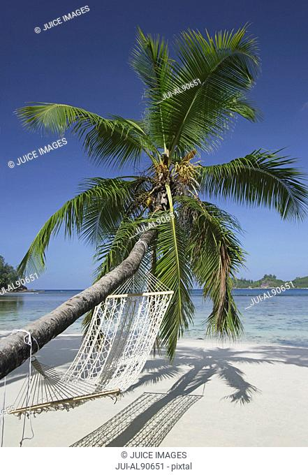 Palm Tree with Hammock on beach, Mahe', Seychelles