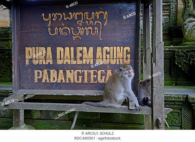 Long-tailed Macaques, Pura Dalem Agung, Holy Sacred Monkey Forest, Ubud, Bali, Indonesia