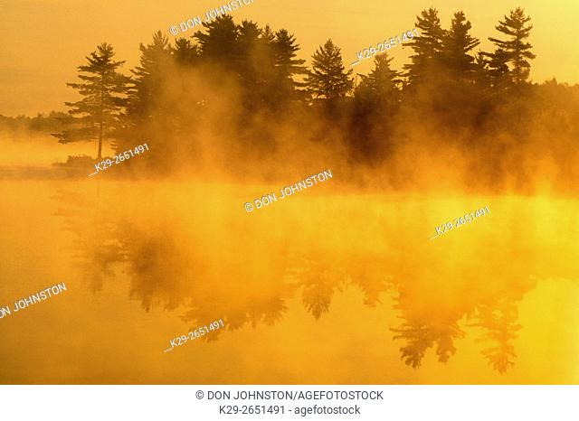 Pine tree silhouettes on lake shore with fog at sunrise, Burwash, Ontario, Canada