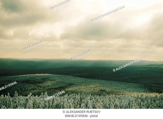 Forests in remote landscape