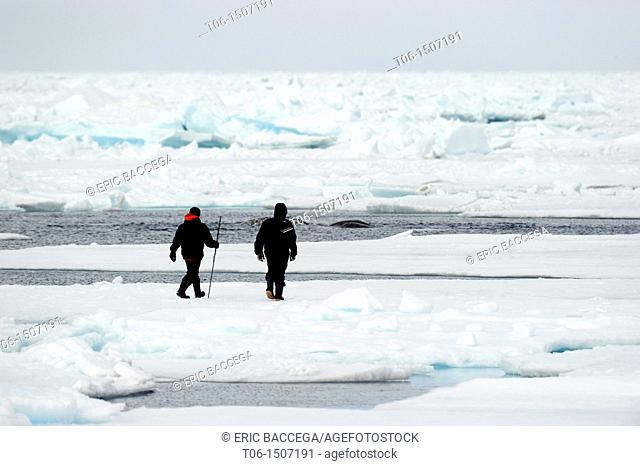 Inuit guides observing narwhales Monodon nonoceros of icepack, Floe edge, Arctic Bay, Baffin Island, Nunavut, Canada