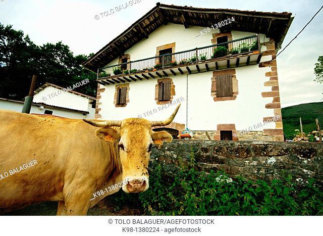 Farm, Baztan Navarra Pyrenees Mountains Spain