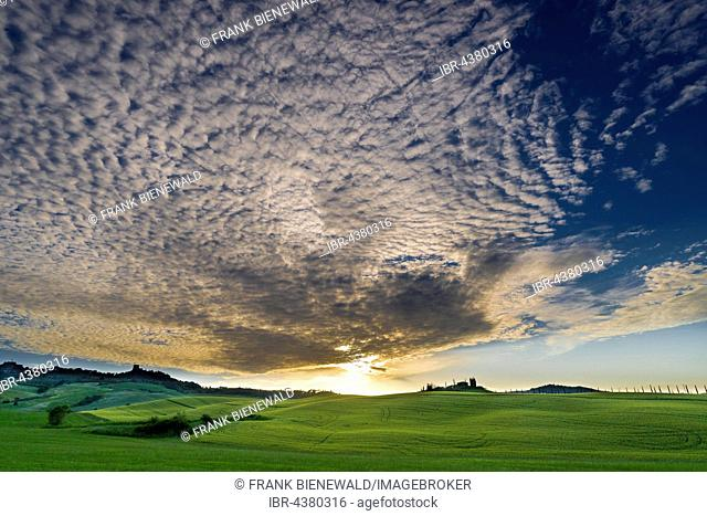 Typical green Tuscan landscape in Bagno Vignoni, Val d'Orcia with a farm on a hill, grain fields, cypresses at sunset, San Quirico d'Orcia, Tuscany, Italy