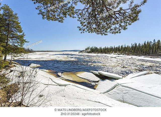 Landscape in springtime with icefloes on a river, snow in the forest and sun shining from a clear blue sky, Gällivare county, Swedish Lapland, Sweden