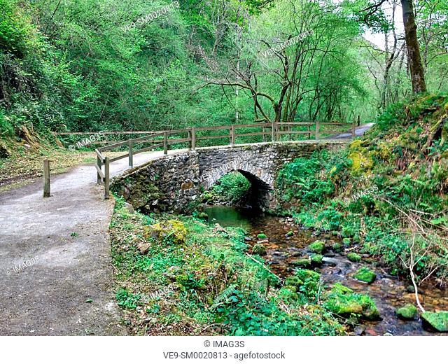 Track to El Chorrón waterfall, Villamayor, Piloña municipality, Asturias, Spain