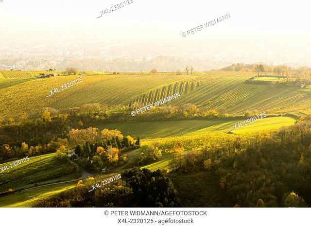 View to Vienna vineyards from mountain Leopoldsberg, Austria, Vienna, Danube City