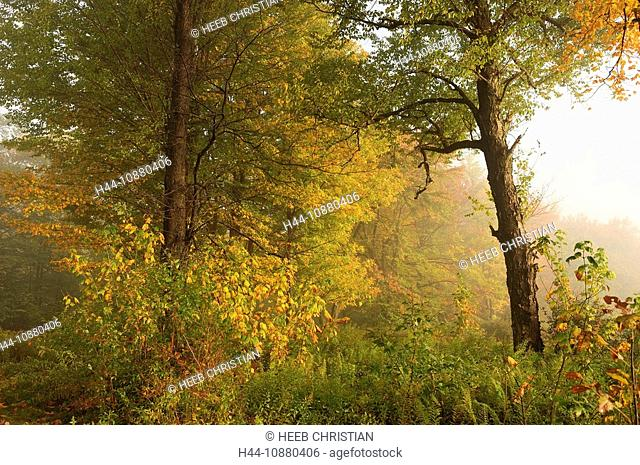 Fall, colours, colors, Trees at Lower Lake, Fog at sunrise, Promised Land State Park, Pennsylvania, USA