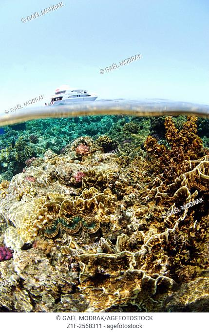 Diving cruise ship on an egyptian reef