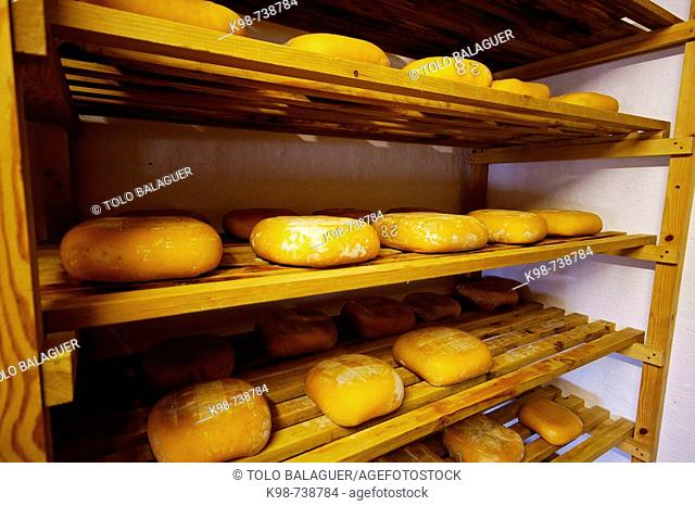 Ecological cheese from the milk of a local cattle breed, Algendaret Nou typical farm. Mao, Minorca, Balearic Islands, Spain