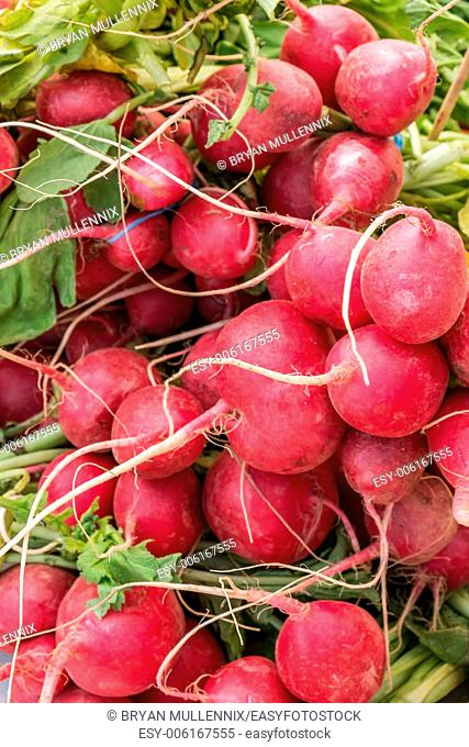 Fresh bunch of red radishes