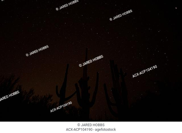 Night shooting, Saguaro National Monument, Sonoran Desert, Arizona, United States