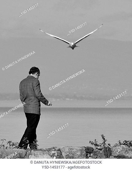 Man, alone, walking on a bank of the Geneva Lake, Geneva, Switzerland, seagull flying