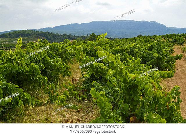 Comarca del Montsant, que es una denominación de origen establecida en 2002 e integrada por los municipios y bodegas que, hasta esa fecha