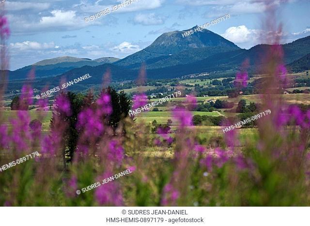 France, Puy de Dome, Parc Naturel Regional des Volcans d'Auvergne (Natural regional park of Volcan d'Auvergne), near Saulzet le Froid