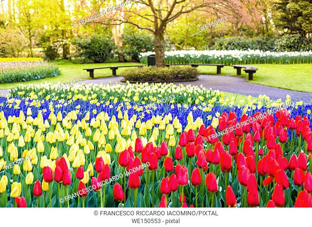 Tulips and flowers at Keukenhof gardens, Lisse, Netherlands