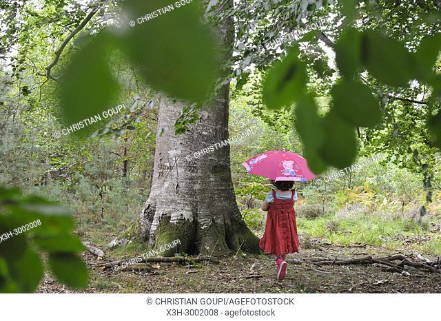 little girl beside a remarkable common beech tree in the Forest of Rambouillet, Haute Vallee de Chevreuse Regional Natural Park, Department of Yvelines
