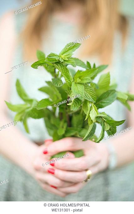 Woman holding a bunch of freshly picked mint