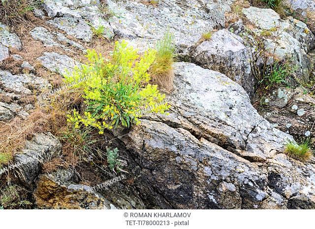 Ukraine, Dnepropetrovsk Region, Dnepropetrovsk District, Voloske, Rocks overgrown by clumps of plants