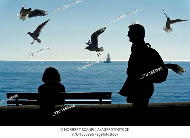 Europe, France, Alpes-Maritimes, Cannes. Seagulls by the sea