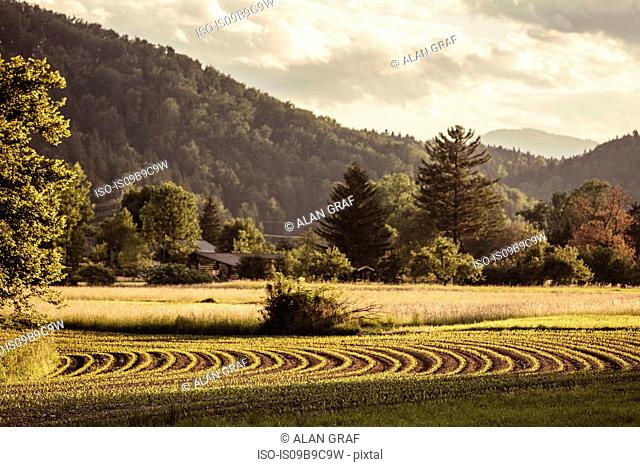 Landscape view of valley fields and forest, Mozirje, Brezovica, Slovenia
