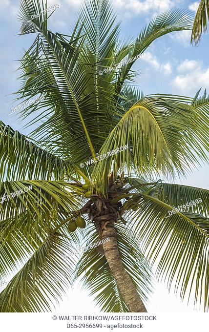 French West Indies, St-Martin, Baie Nettle, palm tree, morning