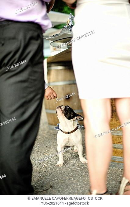 dog under a table at a wedding feast takes food from a hand